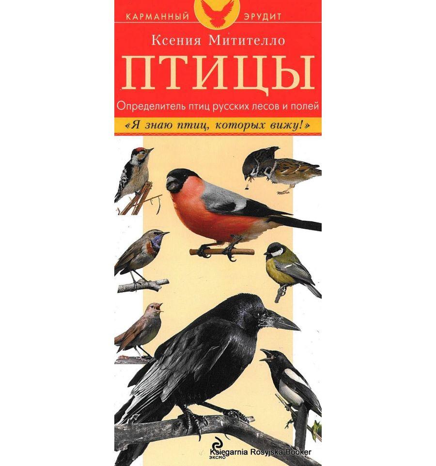 справочник птиц с картинками отец